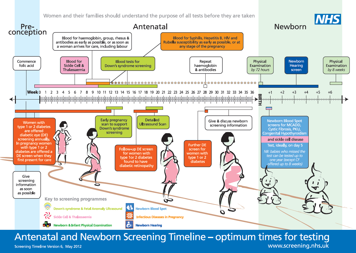 Figure 1: Antenatal and newborn screening timeline.